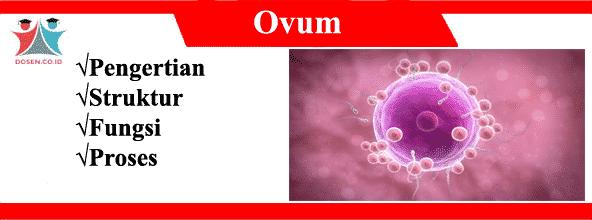 Ovum: Pengertian, Struktur, Fungsi Serta Proses Pembentukan Sel Telur