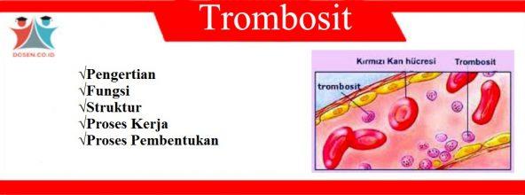 Trombosit: Pengertian, Fungsi, Struktur, Proses Kerja dan Pembentukan