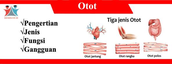 Otot: Pengertian, Jenis, Fungsi Serta Gangguan Pada Otot