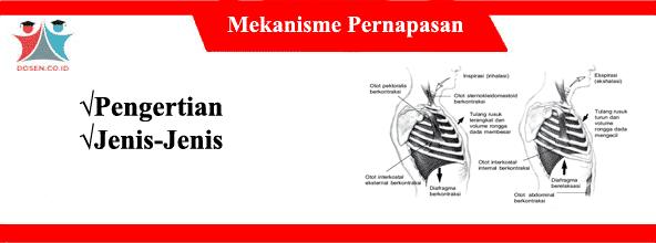 Mekanisme Pernapasan: Pengertian Serta Jenis-Jenisnya