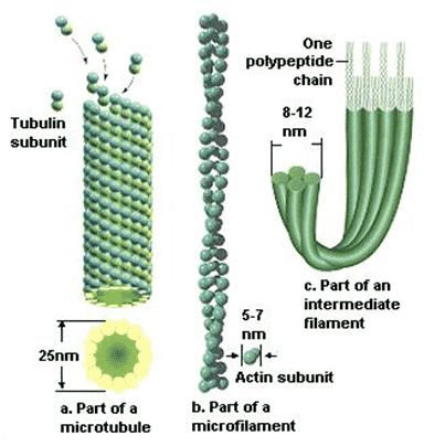 Mikrofilamen