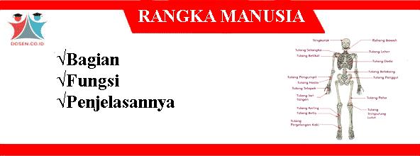 Rangka-Manusia