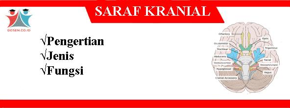 Saraf Kranial: Pengetian, 12 Jenis Saraf Kranial Serta Fungsinya