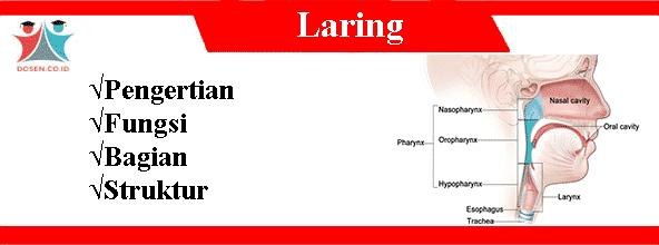 Laring: Pengertian, Fungsi, Bagian Serta Struktur Laring