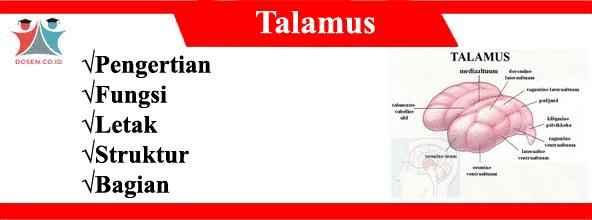 Talamus: Pengertian, Fungsi, Letak, Struktur Serta Bagiannya Lengkap