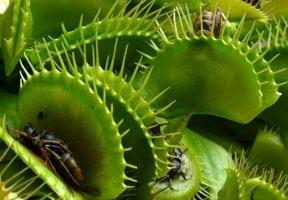 Contoh Adaptasi Fisiologi Pada Tumbuhan