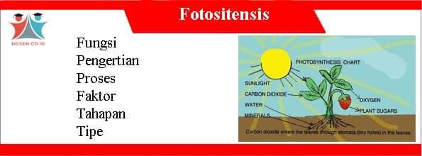 Fungsi Fotositensis: Pengertian, Proses, Faktor, Tahapan dan Tipe