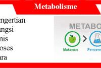 Metabolisme: Pengertian, Fungsi, Jenis, Proses dan Caranya