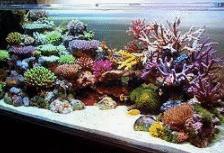 Ekosistem Akuarium