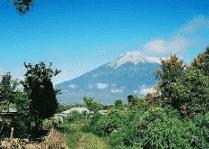 Ekosistem Gunung