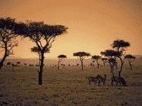 Ekosistem Hutan Sabana