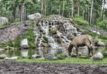 Ekosistem Kebun Binatang