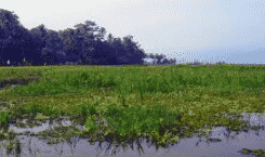 Ekosistem Rawa