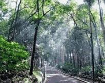 Ekosistem Taman Hutan Raya