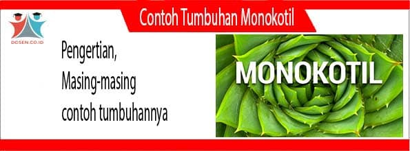 Contoh Tumbuhan Monokotill