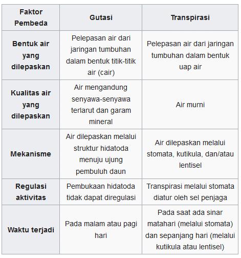 Perbedaan-Gutasi-dan-Transpirasi-Pada-Tumbuhan