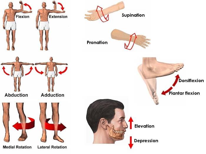 Jenis-Jenis gerak otot