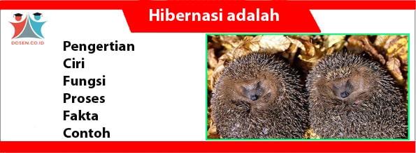 Hibernasi adalah