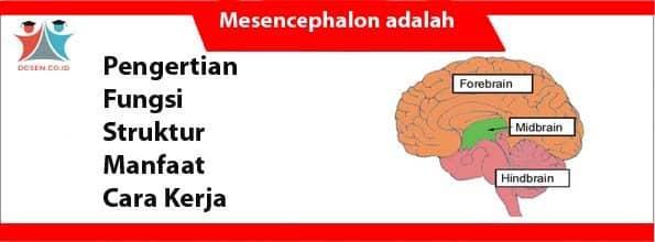 Mesencephalon adalah