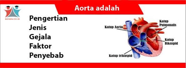 Aorta adalah