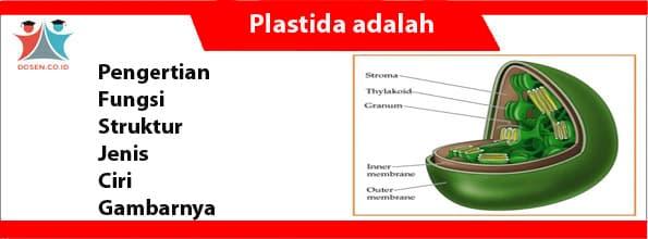 Plastida adalah