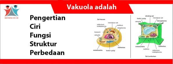Vakuola adalah