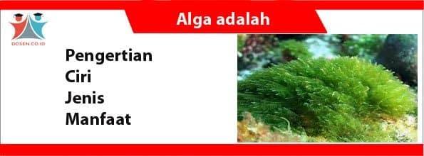 Alga adalah