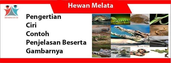 Hewan Melata