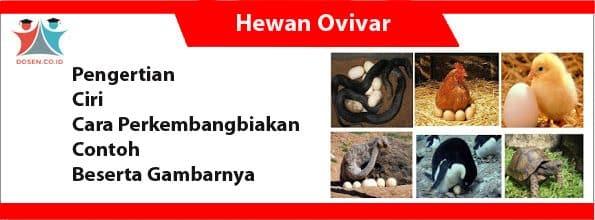 Hewan Ovivar