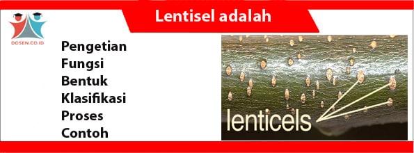 Lentisel adalah