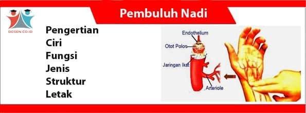 Pembuluh Nadi