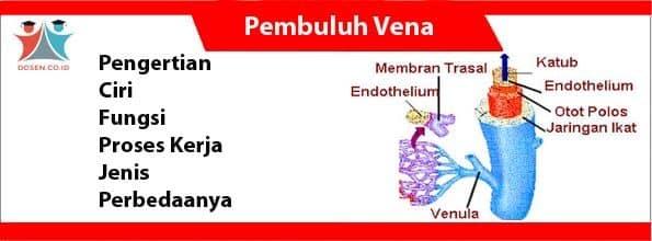 Pembuluh Vena