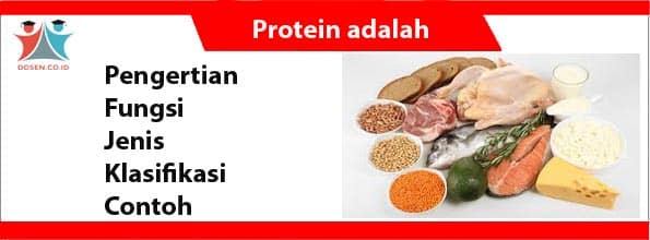 Protein adalah