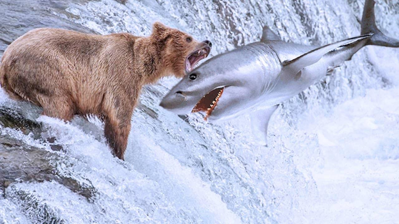 Beruang Kutub dengan Ikan Salmon